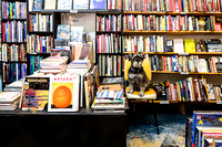 Sarah_Anderson_Photography_Hortons_Books_interior_dog